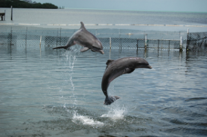 swimming with dolphins, sharks or other sea creatures