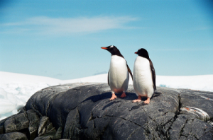 antarctic trips and adventure tours